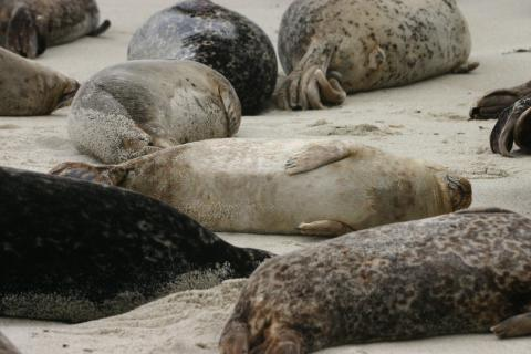 Several seals on a beach
