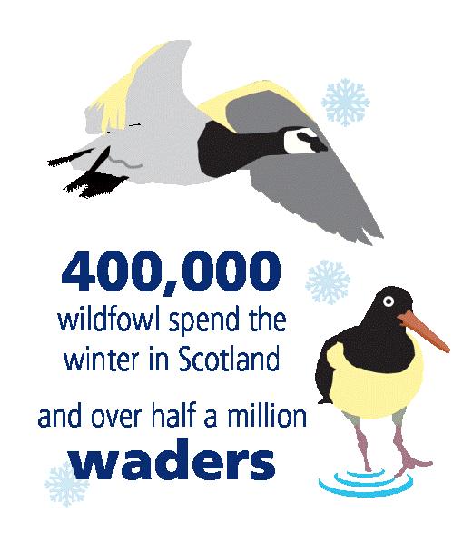 MPAs birds infographic