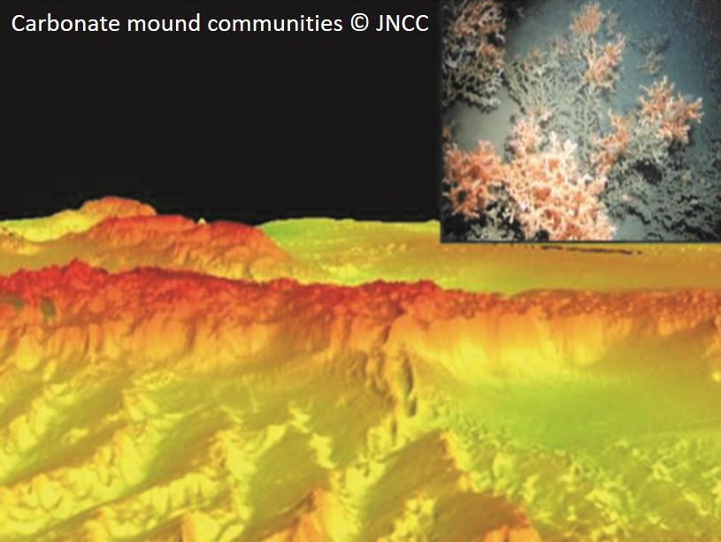 Carbonate mound communities © JNCC