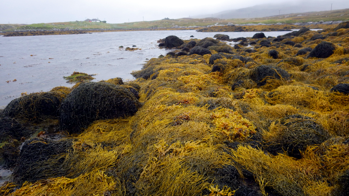An extremely sheltered shore, Loch Amhlasaraidh, North Uist