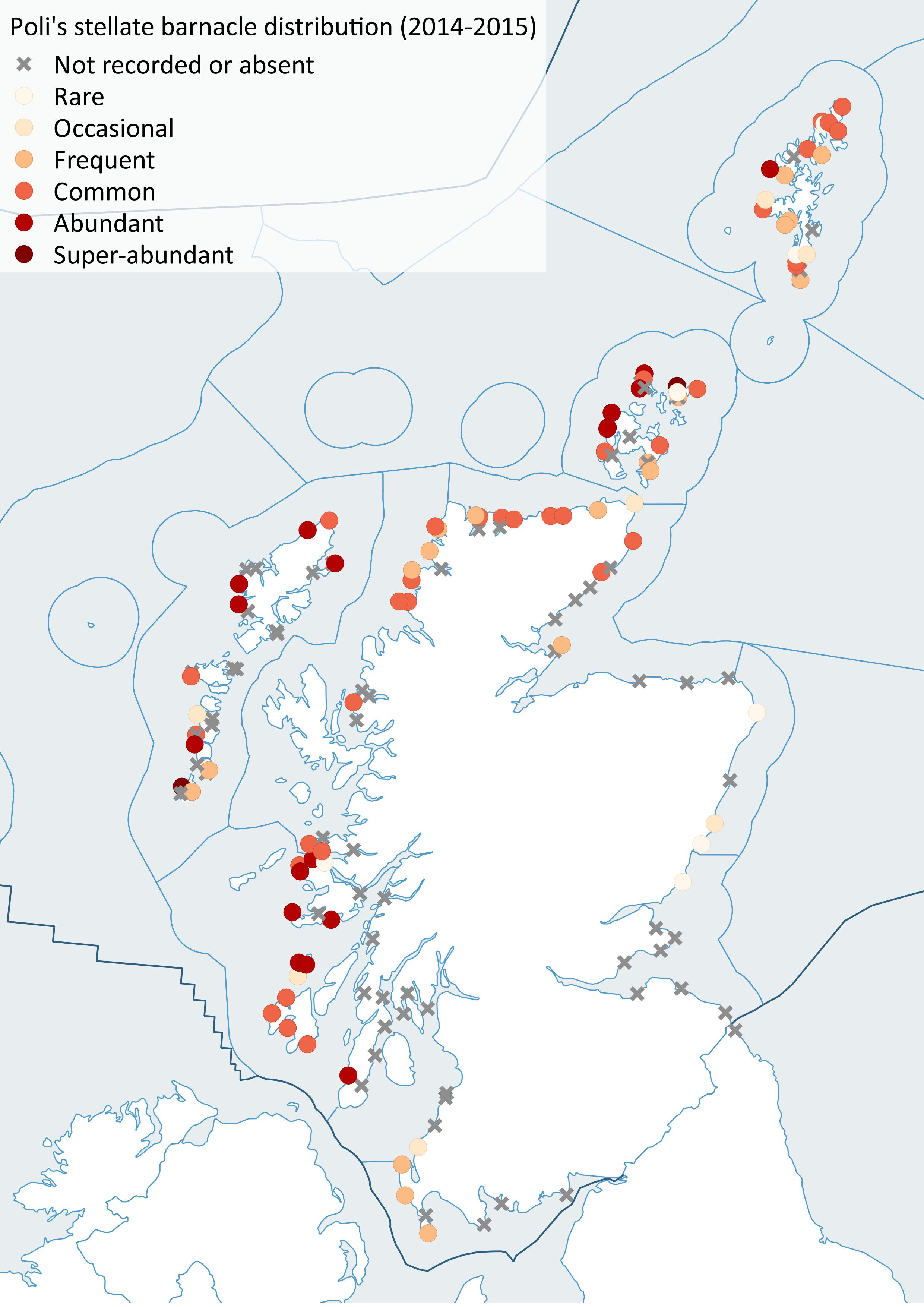 Distribution of Poli's stellate barnacle (Chthamalus stellatus), 2014-2015