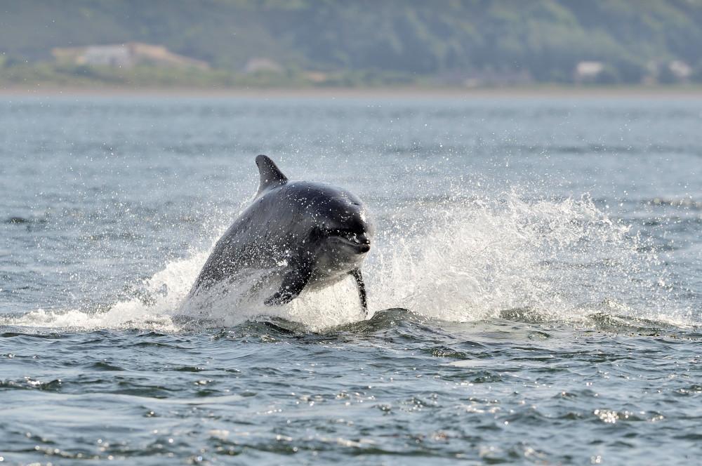 Bottlenose dolphin © Lorne Gill/NatureScot