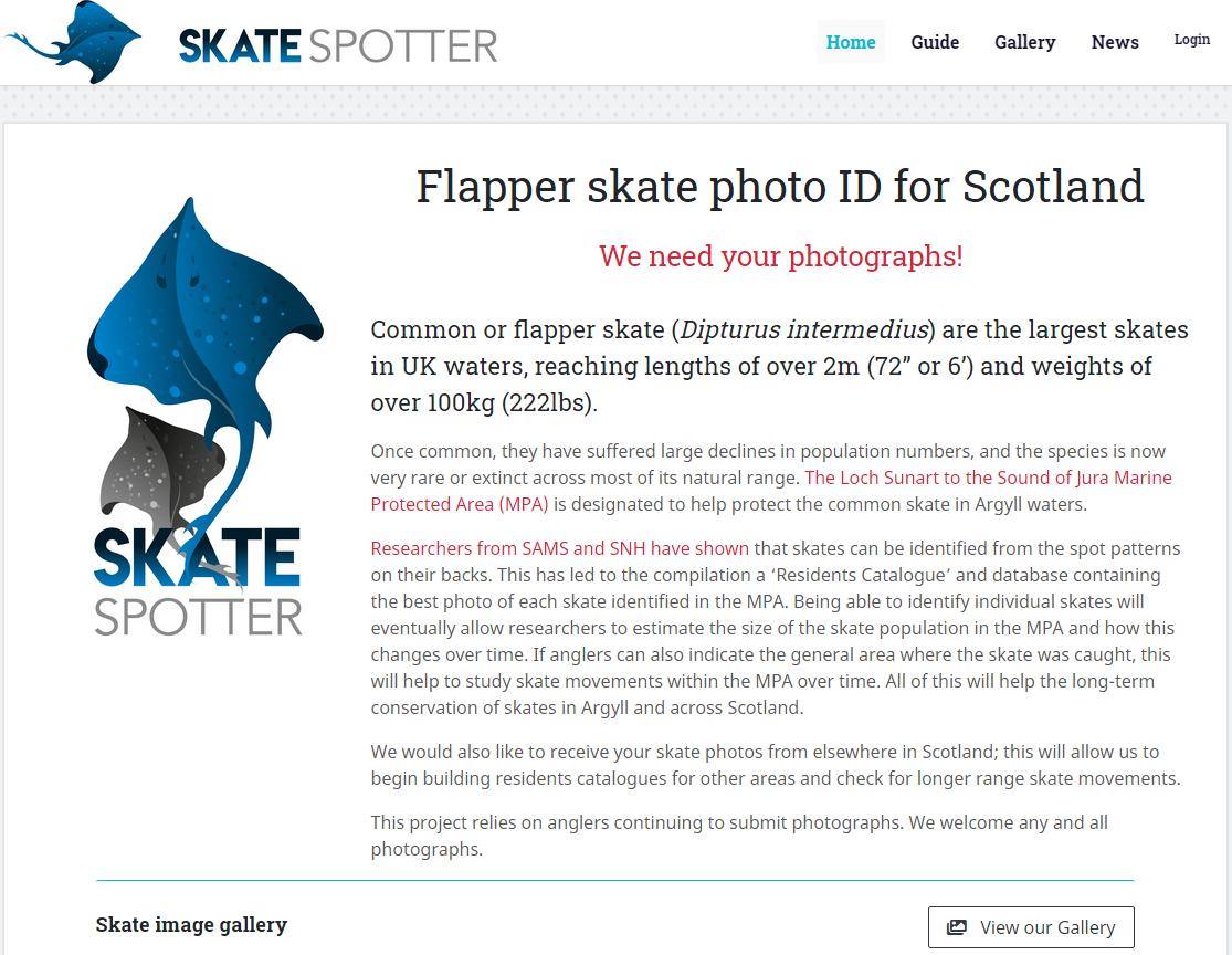 The Skatespotter website