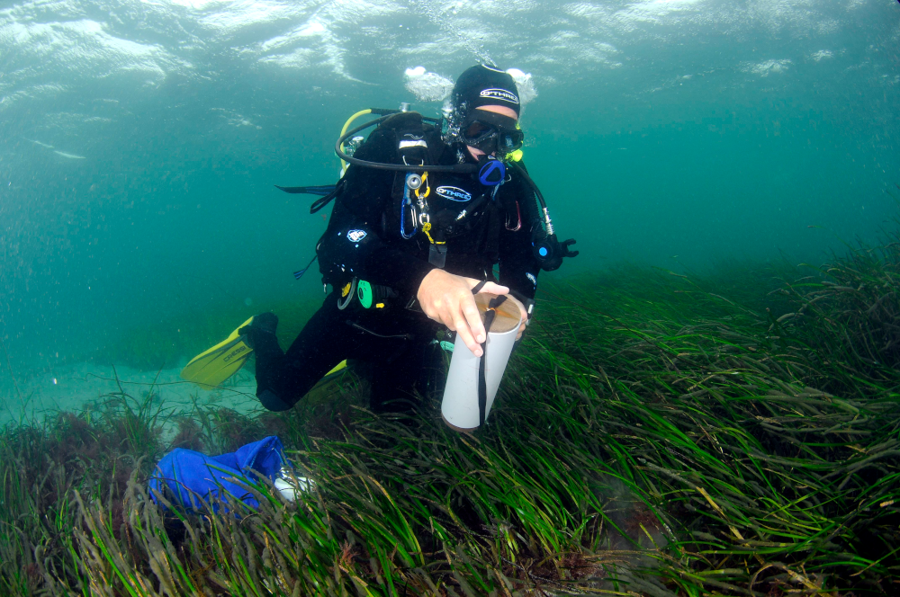 Diver in Sound of Barra © NatureScot