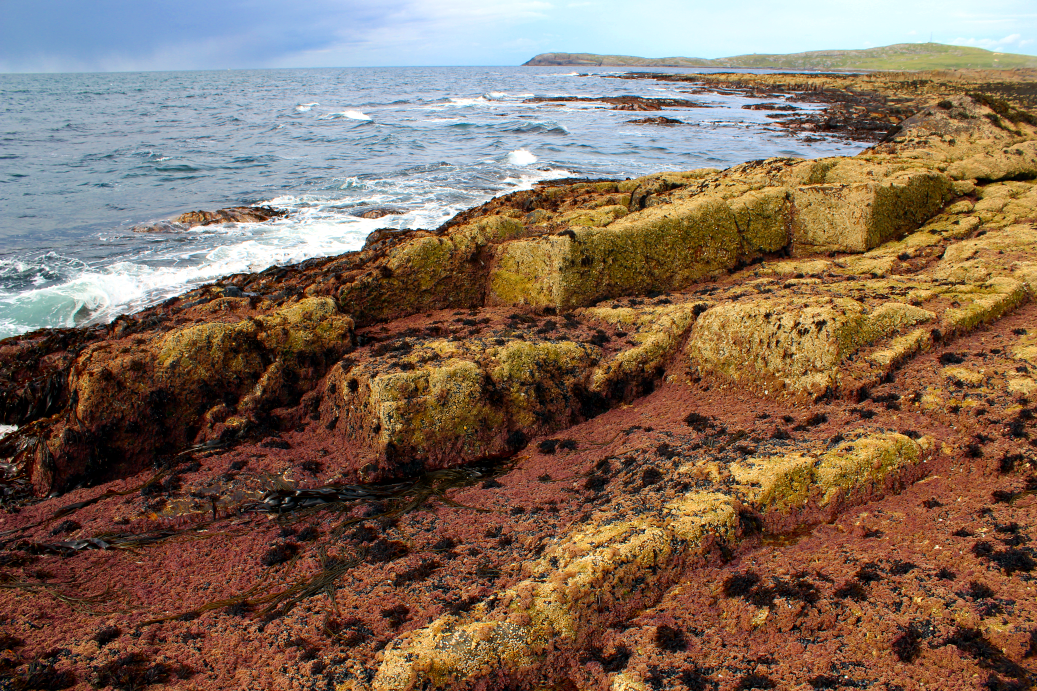 A very wave-exposed shore dominated by pink coralline algae and barnacles, Barra, Borve Point (Outer)