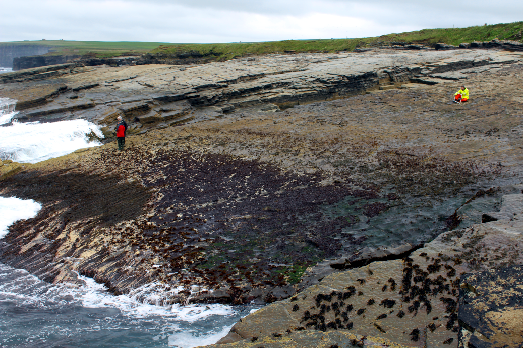 A very wave-exposed shore dominated by dulse (the red alga Palmaria palmata), Orkney Mainland, Banks