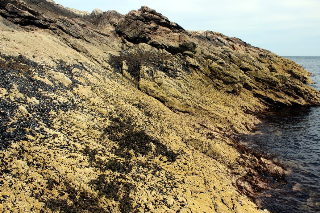 An exposed shore with barnacles, mussels and patches of wave-tolerant seaweed, Lewis, Tiumpan Head