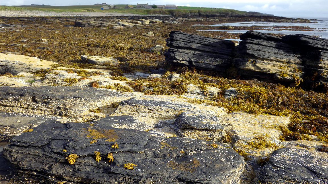 A fairly sheltered shore, Long Geo, Orkney Mainland