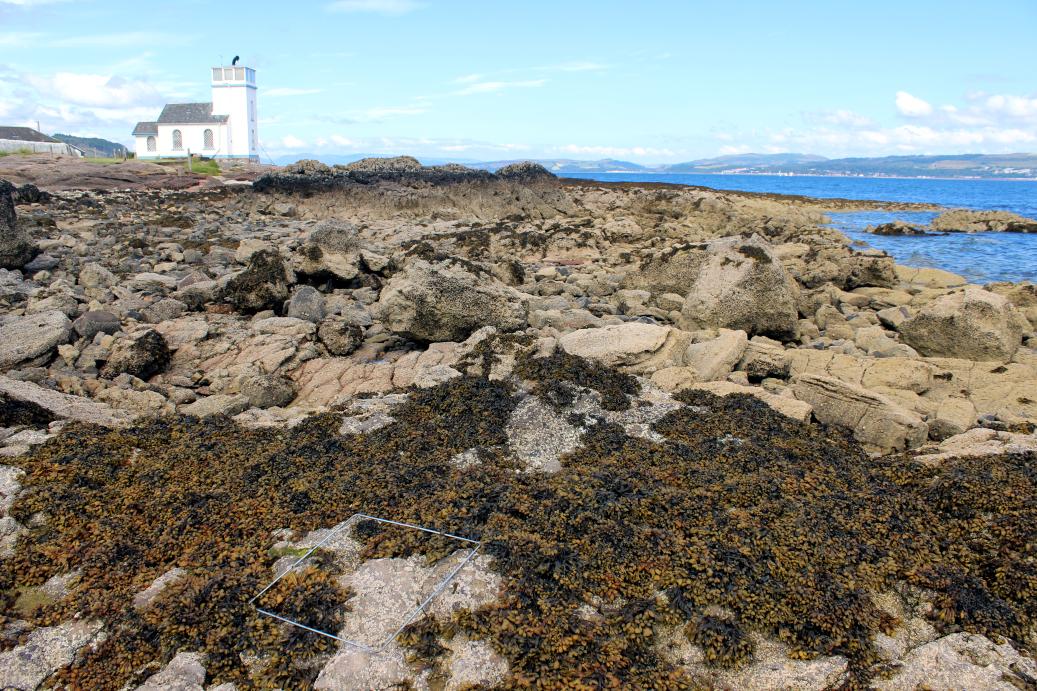 A sheltered shore, Toward Point, Cowal