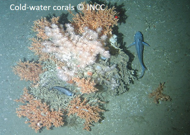 Cold-water coral reefs © JNCC