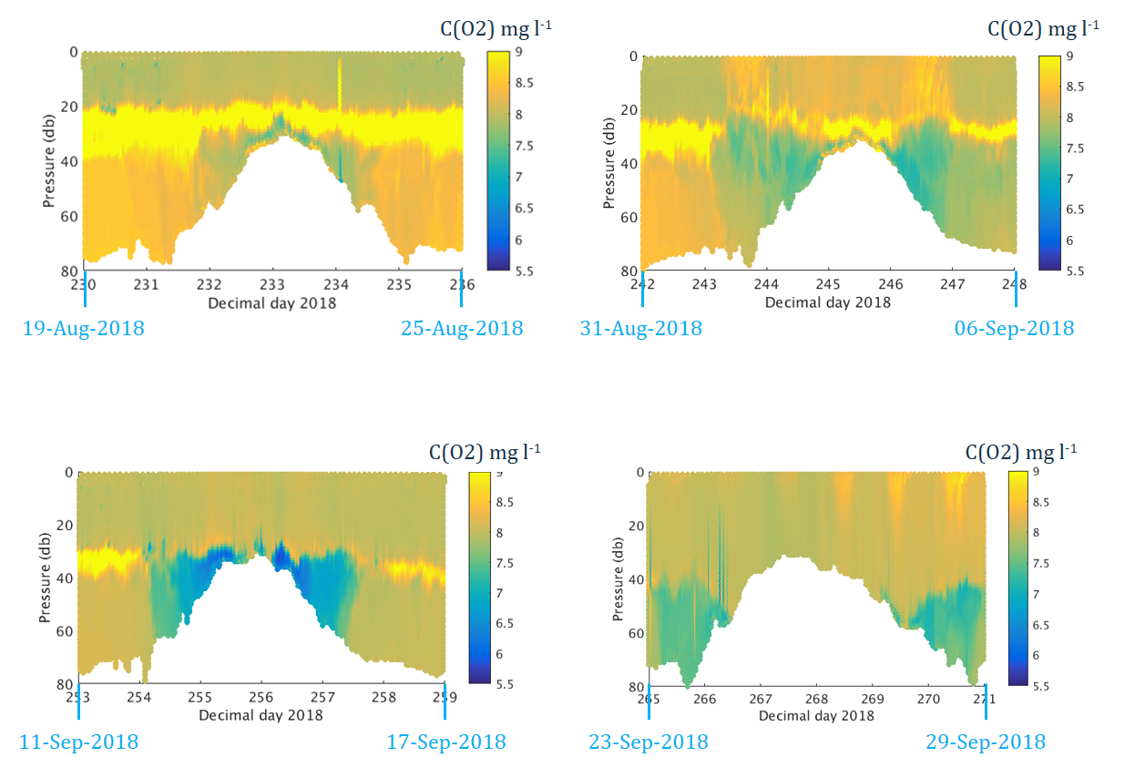 Figure 3 Four snapshots of dissolved oxygen concentration