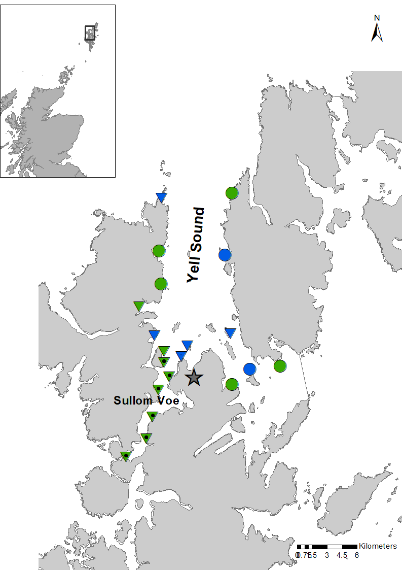Figure 3: Trend and status assessments of imposex in dog whelk populations in Sullom Voe and Yell Sound up to 2015.