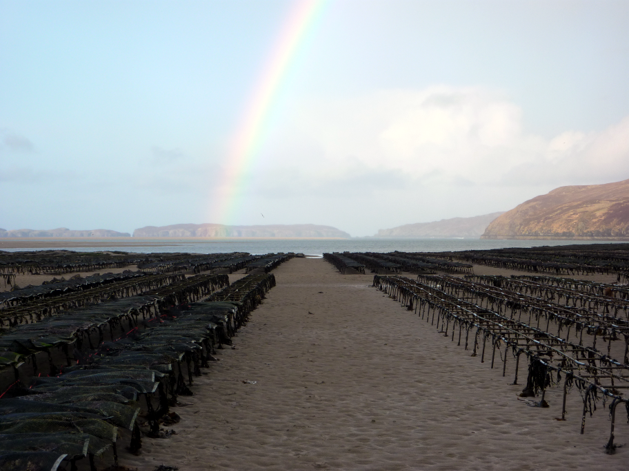 Figure j: Oyster trestles, Kyle of Tongue, Highland. Photo by Andrea Warwick