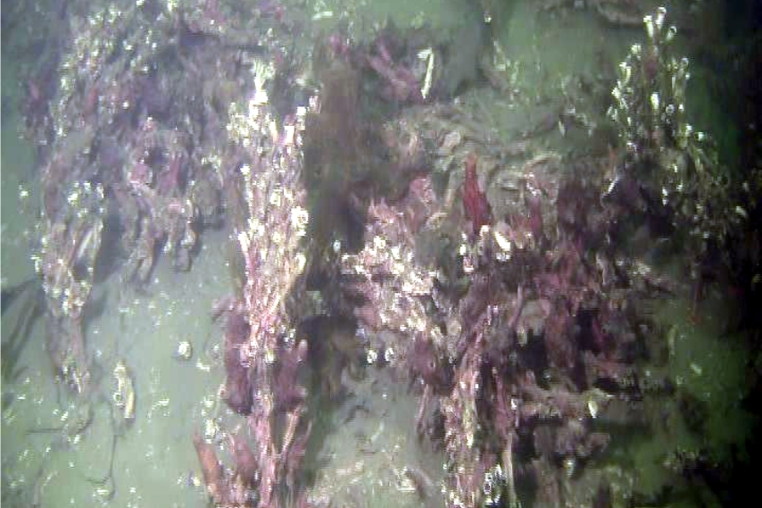 Screen grabs from video taken along the same transect in Loch Creran in 2014