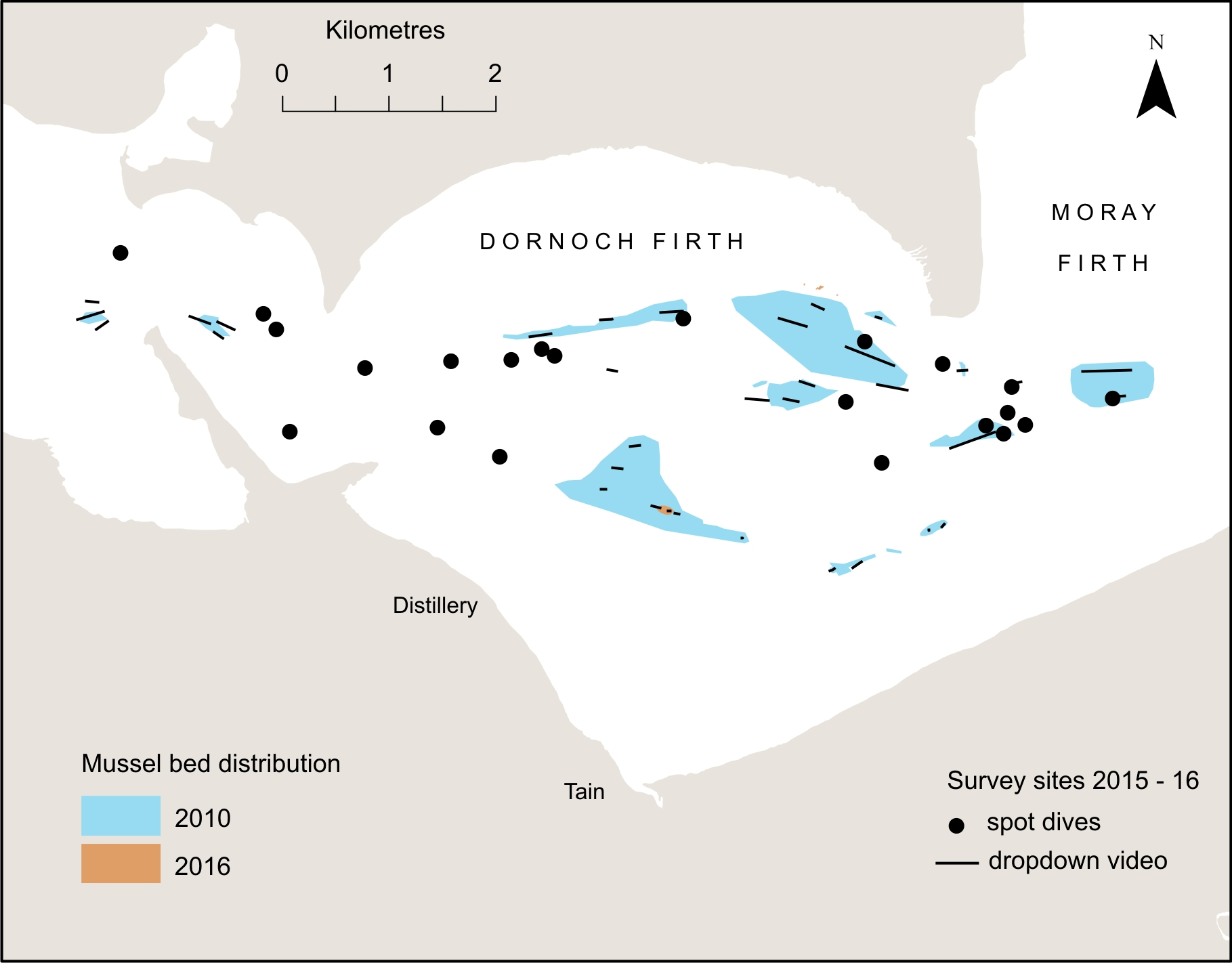 Distribution of subtidal blue mussel beds in the Dornoch Firth in 2010 and 2016.
