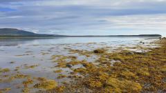 Loch Fleet National Nature Reserve © Lorne Gill, NatureScot