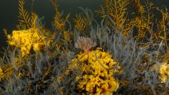 Sponges, brittlestars and sea oak - Taynish rapids, Loch Sween © Ben James, NatureScot