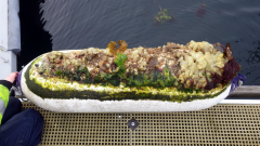 Biofouling on yacht fender