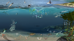 Nearshore temperate marine food web illustrating the relationships between different species groups including plankton, fish, birds and cetaceans