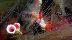 Serpulid reef © Tom Mercer NatureScot